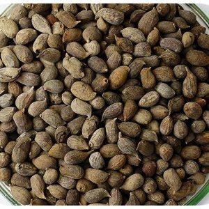 Sementes Grama Amendoim (01 KG)